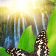 Royalty-Free Stock Photo: Beautiful butterfly over waterfall in wild forest
