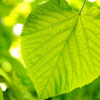 Stock Photo: Picture of a green leaves over abstract blurred background