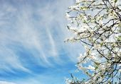 Beautiful spring tree flowers over blue sky — Stock Photo