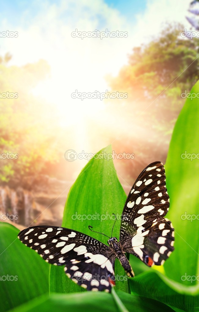 Beautiful butterfly over waterfall in wild forest  Stock Photo #5812145