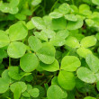 Clover field — Stock Photo #5868426