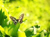 Beautiful butterfly on a green leaf — ストック写真