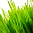 Fresh green grass background — Stock Photo #5893457