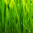 Fresh green grass background — Stock Photo #5893459