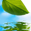 Fresh green leaf over blue background reflected in water — Foto de Stock