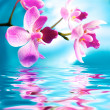 Beautiful orchid flowers reflected in water — Stock Photo #5893548