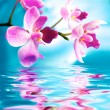 Stock Photo: Beautiful orchid flowers reflected in water