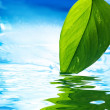 Fresh green leaf and clear blue water reflected in water - Stock Photo