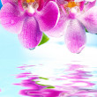 Beautiful orchid flowers reflected in water - Stock Photo