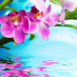 Beautiful orchid flowers reflected in water - Foto de Stock