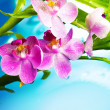 Beautiful orchid flowers - Stock Photo