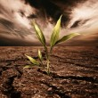 Green plant growing through dead soil — Stock Photo