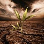 Green plant growing through dead soil — Stock Photo