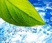 Fresh grean leaf and clear blue water — Stock Photo
