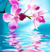 Beautiful orchid flowers reflected in water — Stock Photo