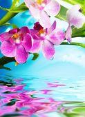 Hermosas flores de orquídeas se refleja en el agua — Foto de Stock