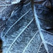 Frozen leaf texture — Stock Photo #6229439