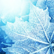 Frozen leaf texture — Stock Photo