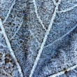 Frozen leaf texture — Stock Photo #6229442