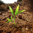 Green plant growing through dry soil — Foto de Stock