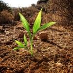 Green plant growing through dry soil — Stock Photo