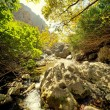 Waterfall in the forest — Stock Photo #6229767