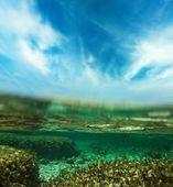 Tiro subacuático — Foto de Stock