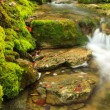 Mountain stream, mossy stones — Stock Photo