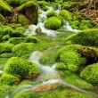 Stock Photo: Mountain stream, mossy stones