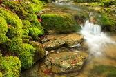 Mountain stream, mossy stones — Stock Photo