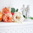 Blossom pink roses — Stock Photo