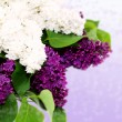 Stock Photo: Beautiful lilac isolated