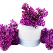 Cream with Lilac — Stock Photo