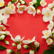 Beautiful Jasmine — Stock Photo #5785087