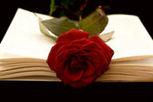 The Book and the Rose — Stock Photo