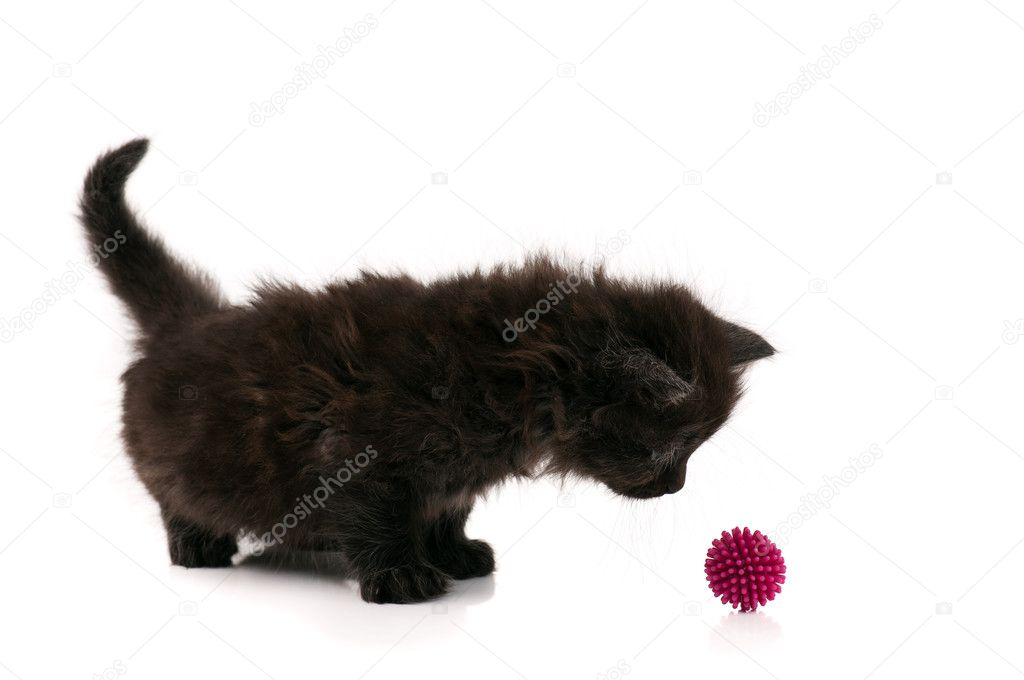 Cute little black kitten isolated on white background  Stock Photo #6491241