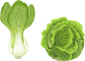 Head of green cabbage and lettuce — Stock Vector