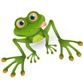 Green frog — Stock Vector