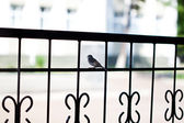 Solitary sparrow on a metal railing — Stock Photo