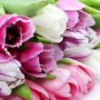Fresh pink tulips — Stockfoto