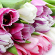 Fresh pink tulips — Foto Stock