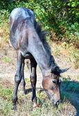 Beautiful horse — Стоковое фото