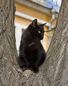 Black cat on a tree — Stock Photo