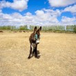 Donkey in the farm - Stock Photo