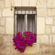 Stock Photo: Flowers in window