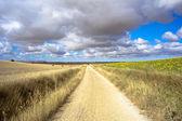 Estrada na zona rural — Foto Stock