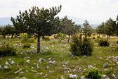 Plateau Karst — Stockfoto