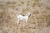 Young lamb — Stock Photo