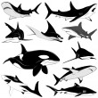 Set of various sharks, tattoo — Stock Vector