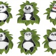 Pandas isolated in the leaves — Stock Vector